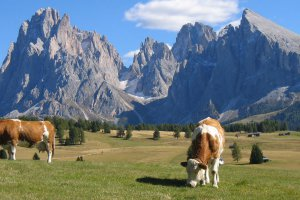 Vacanze escursionistiche sull'Alpe di Siusi 1